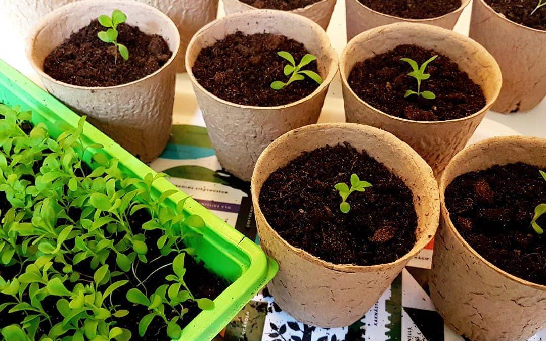 Dags att skola om plantor!