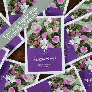 Fröpåse Purpurklätt 'Oculata' | Sandborgs Trädgård