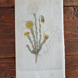 Botaniska blad | Sandborgs Trädgård