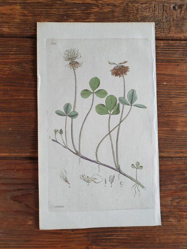 Botaniska blad   Sandborgs Trädgård