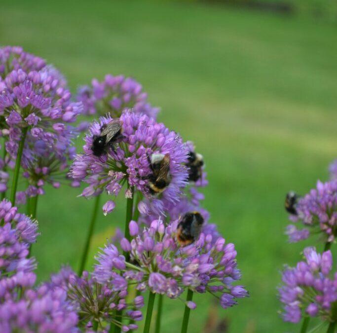 Mina favorit bi- och fjärilsväxter
