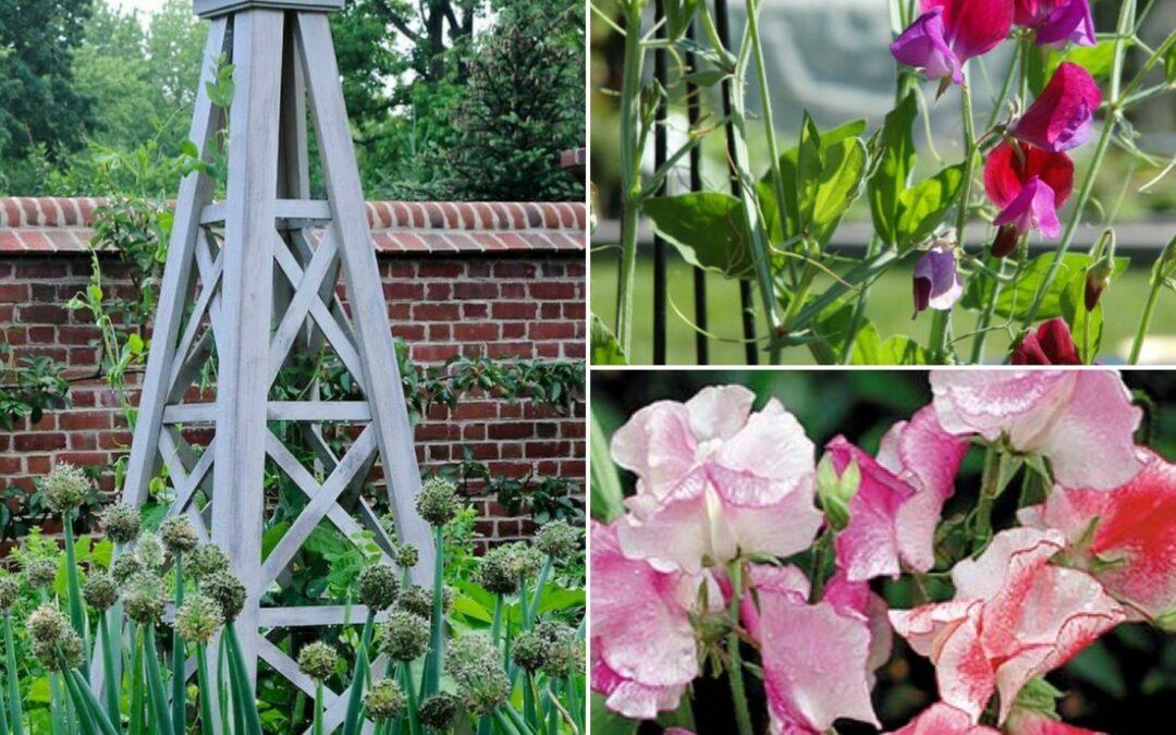 Drömmen om trädgårdstorn och luktärter