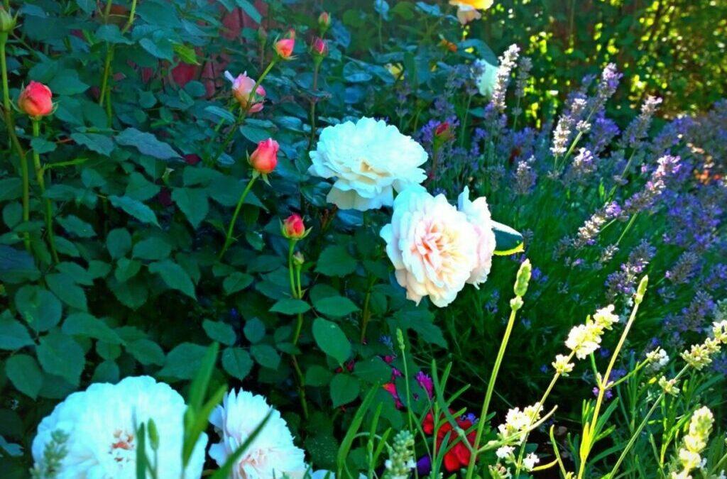 Skapa din egen Mariaträdgård